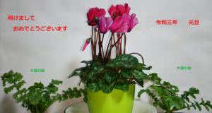 Photo_20210101123001